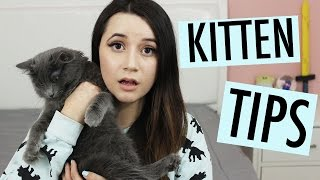 THINGS I WISH I KNEW BEFORE GETTING A KITTEN| AmyCrouton