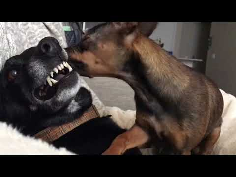 Dog licking at it's finest from YouTube · Duration:  3 minutes 2 seconds
