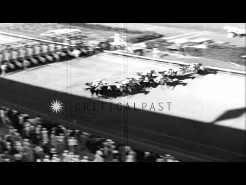 Time Clock, the racehorse wins the Classic Florida Derby at Hialeah Park in Miami...HD Stock Footage