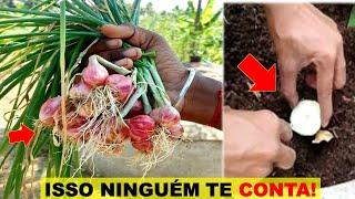 Como Plantar Cebola no Vaso – Você ira Colher em 90 Dias