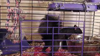 Chip - My Pet Squirrel ! (720p Hd)