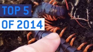 Top 5 So Much Nope Videos of 2014 || JukinVideo Top Five