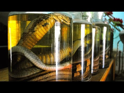 Chinese Rare Animal-Alcohol Maker Gets Serious Prison Sentence