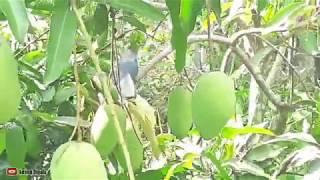 penampakan burung langka di pekarangan warga| Palangka Raya- Kalimantan Tengah