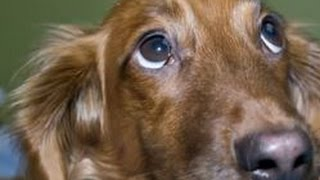 Music To Look At Puppy Dog Eyes To (this Puppy Is Mad & He's Not Going To Take It Anymore!)