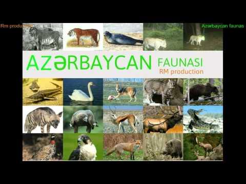 Azərbaycan faunası logo