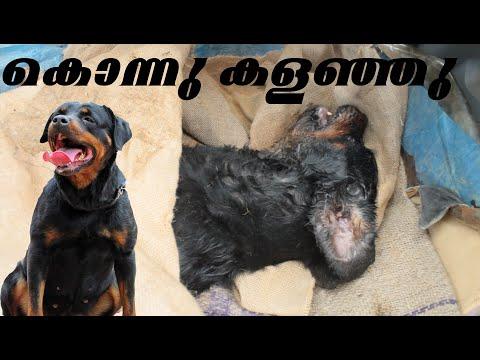 | Rottweiler | Killed | ഇനി ആർക്കും ഈ  അവസ്ഥ വരാൻ പാടില്ലാ