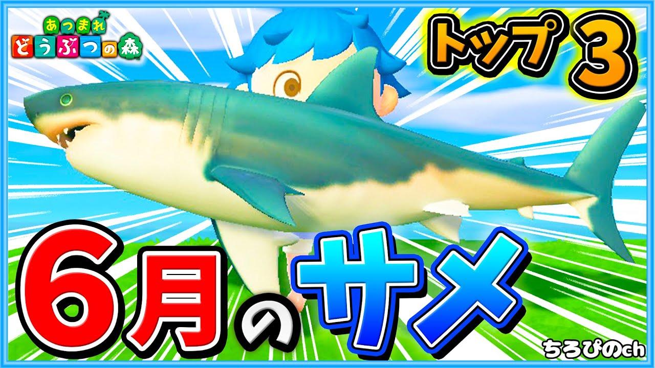 サメ とび 釣り 方 森
