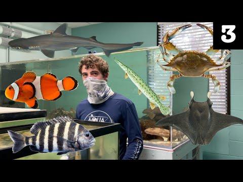 Exploring Marine Science Lab with Crazy Aquatic Creatures (New College of Florida)