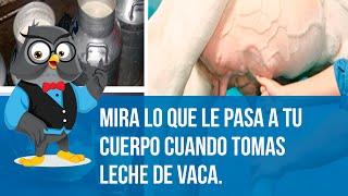 Mira Lo Que Le Pasa A Tu Cuerpo Cuando Tomas Leche De Vaca.