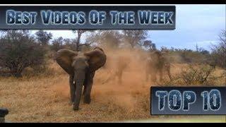 Лучшие Видео Недели || Top 10 Videos Of The Week || August 31th 2013