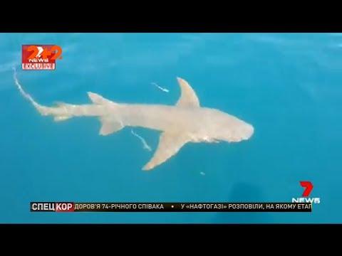 Акула напала на жінку, яка годувала її з рук