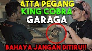 *bahaya* ATTA PEGANG KING COBRA GARAGA! Panji di Gigit Bolak-Balik🤢