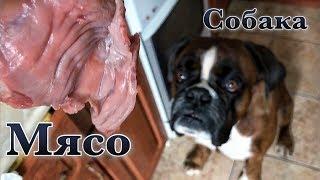 Мясо Для Собаки.Боксёр Тайсон