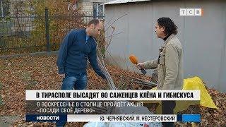 Tiraspol shahrida zarang va hibiscus 60 tup o'simlik bo'ladi