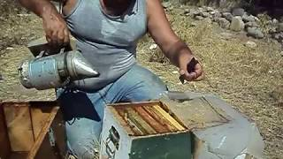 Ana Arı kutusundan Bal Hasadı. 0535 925 08 81