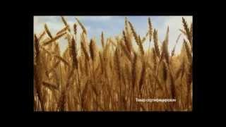 Макароны Султан(Продукция марки «Султан» является продукцией, изготовленной из муки твердых сортов пшеницы с помощью само..., 2013-07-18T04:22:06.000Z)