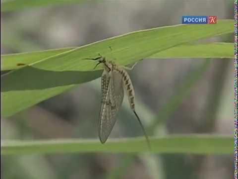 Двойная жизнь насекомых речных долин. Рассказы о природе.