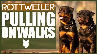 How To STOP Your ROTTWEILER PULLING ON WALKS