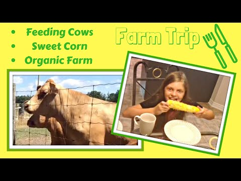 Trip To The Farm To Feed The Cows & Buy Organic GMO Free Corn