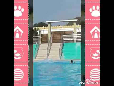 Swimming Elephant in pool