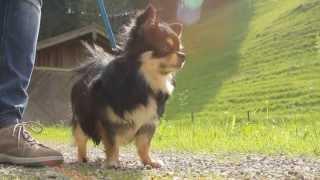 Все О Домашних Животных: Уважение Хозяина К Собаке