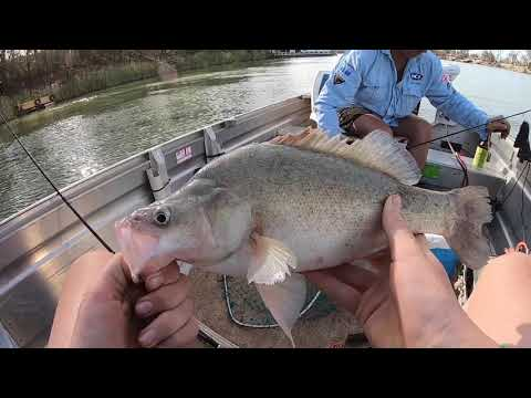 Trolling The Murray River For Golden Perch