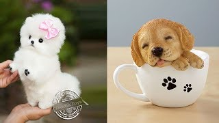 ♥Cutest Puppies Doing Funny Things 2020♥ #1   Cute Animals