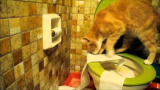 Funny Cat Video - Cat uses toilet paper after peeing in the toilet