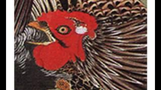 伊藤若冲 動植綵絵群鶏図アニメ