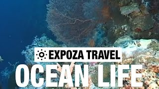 Ocean Life Vacation Travel Video Guide