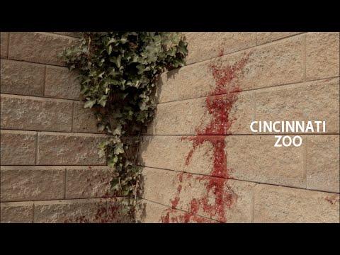 Cincinnati Zoo - An Art Film