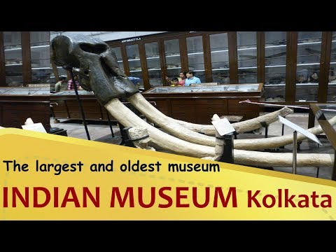 """""""INDIAN MUSEUM"""" The largest and oldest museum in India   Kolkata   West Bengal Tourism"""