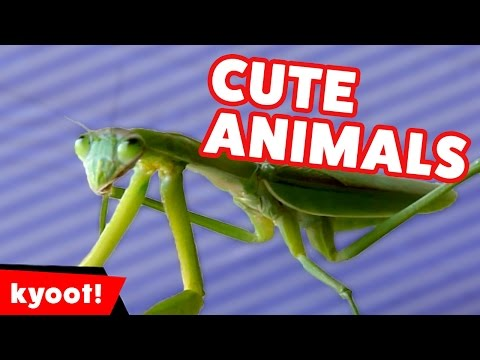 Cute Pet Reaction, Outtakes & Home Video Bloopers of 2016 Weekly Compilation | Kyoot Animals