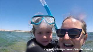 Swimming with Seals / Sea Lions - South Australia, Port Lincoln