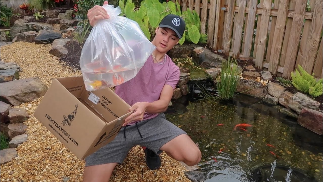 package-of-new-fish-arrived-for-my-pond