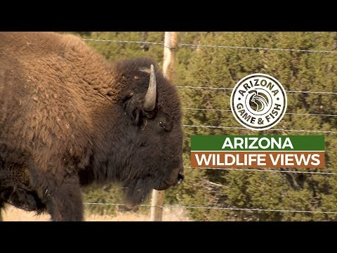 Episode 1 - 2018/2019 Arizona Wildlife Views Television