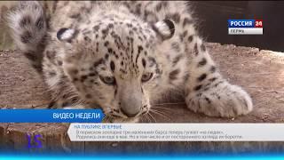 Вести Пермь. События недели 05.08.2018