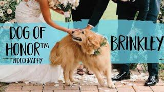 Golden Retriever Walks Herself Down The Aisle At Her Humans' Wedding   FairyTail Pet Care