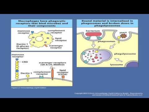 2015 Overview of Innate Immunity, the Microbiome, and the Integrated Immune Response