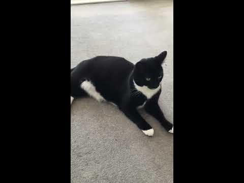 Music for Cats - composed by David Teie - Brie