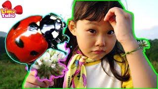 V-Log 라임이 등산하다? 웃다가 배꼽빠짐 주의! 제주도 오름에서 만난 무당벌레 어린이 자연체험 놀이 LimeTube & Toy 라임튜브