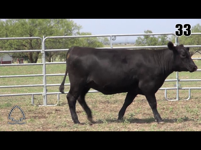 Pearcy Angus Ranch Lot 33