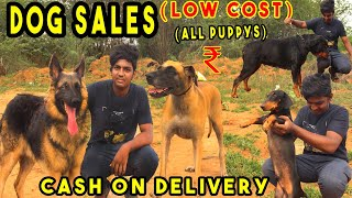 Puppy's and dogs on Sales | All Breeds Puppy Price List | delivery available | kennel near me at1000