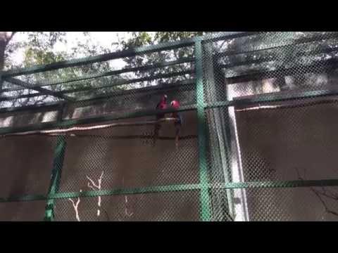 YellowMellowLife Travel   Noisy Red-and-green macaw   Bannerghatta Zoo, Bangalore, India