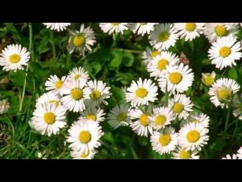 Красивая музыка и цветы для моих друзей!!! - Простые вкусные домашние видео рецепты блюд