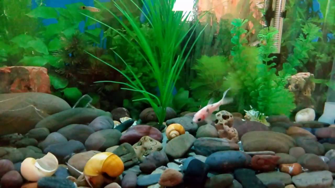 l 39 escargot de l 39 eau douce aquarium youtube. Black Bedroom Furniture Sets. Home Design Ideas