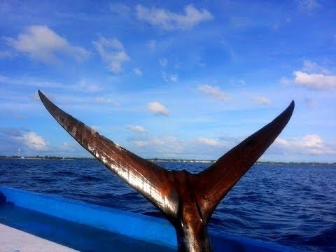 Sports Fishing - Addu - Maldives - ( Ennagan Haahalugaa )