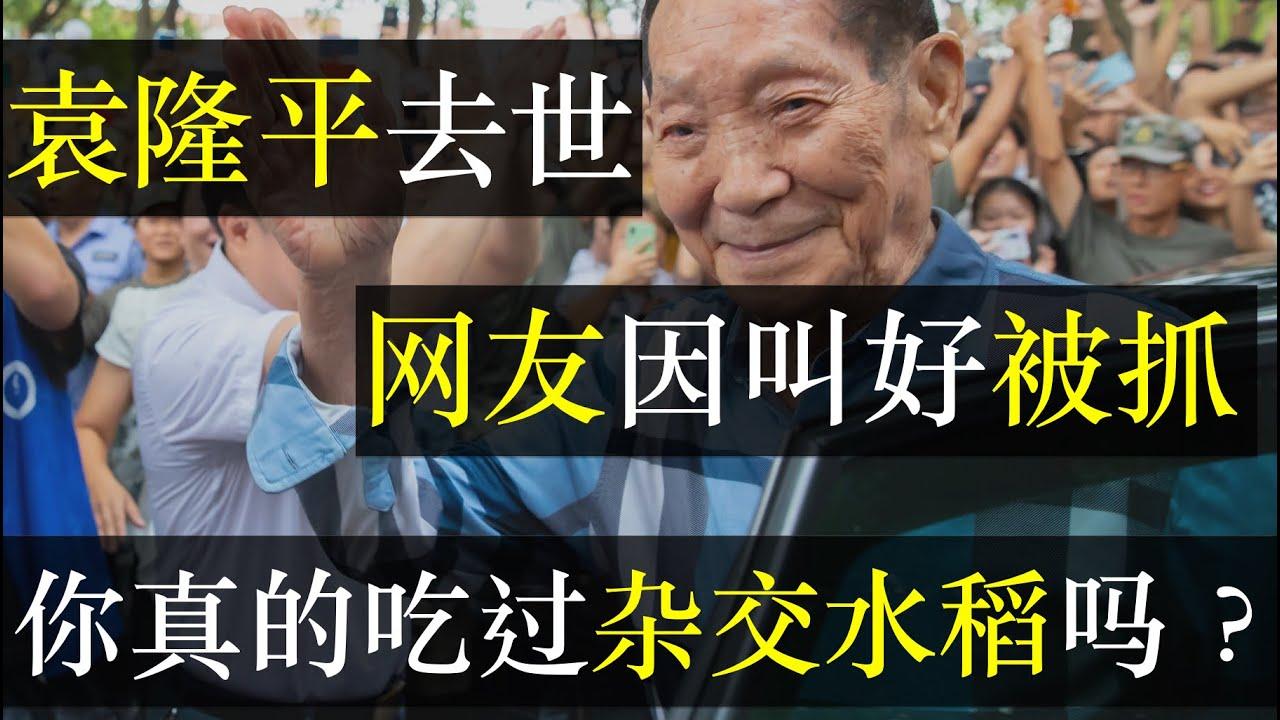 袁隆平去世,网友因叫好被抓,你真的吃过杂交水稻吗?中国杂交水稻研究是一群人的功劳,还是一个人的光环,袁隆平封神背后究竟有何原因。用大米养育了14亿人,是英雄还是遮羞布 ( 单口相声嘚啵嘚之袁隆平去世)
