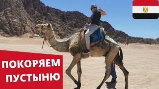 ЕГИПЕТ ПОКОРЯЕМ ПУСТЫНЮ Встретились с бедуинами Прокатились на верблюдах и квадроциклах